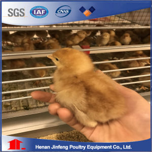 Jinfeng a Type Cheap Chicken Cage Sale in Malaysia Poultry Farm Equipment for Sale pictures & photos