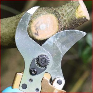 Koham Tools Orchard Branches Cutting Power Pruning Shears pictures & photos