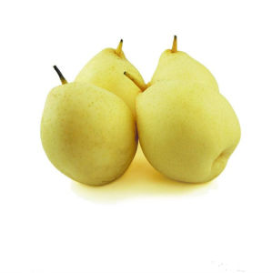 Fresh Ya Pear/Chinese Fruits pictures & photos
