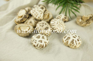 Good Quality White Flower Shiitake Mushroom pictures & photos