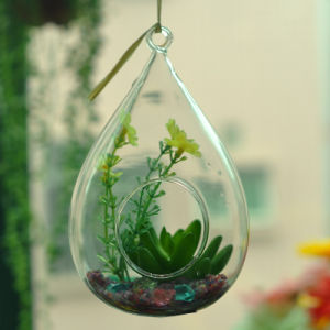 High Borosilicate Plant Hanging Glass pictures & photos