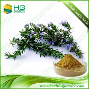 Water Soluble Rosmarinic Acid, Rosemary Powder Extract (CAS No. 84604-14-8)