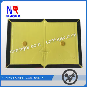OEM/ODM High Quanlity Mouse and Rat Glue Traps pictures & photos