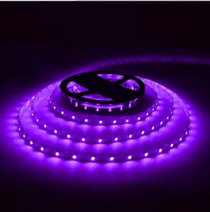 Ce and Rhos 60SMD5050 Purple LED Strip pictures & photos