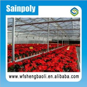 Good Seedbed for Glass/Plastic/Film Greenhouse pictures & photos
