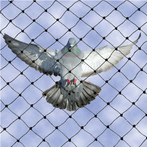 100% Virgin HDPE Anti-Bird Netting/Knotless Netting pictures & photos