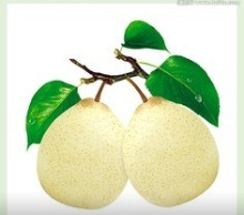 New Crop Chinese Fresh Ya Pear pictures & photos