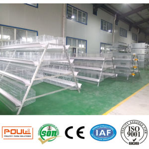 Poultry Farm Layer Chicken Cage (Hot dipped galvanization) pictures & photos