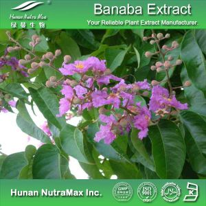 100% Natural Banaba Leaf Extract (Ratio: 4: 1~20: 1, Corosolic acid 1%-98%)
