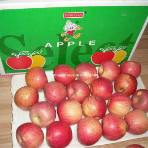 Regular Supplier of Fresh Red Qinguan Apple pictures & photos