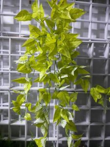 Artificial Plants and Flowers of Hanging Vine Gu-Yy0879 pictures & photos