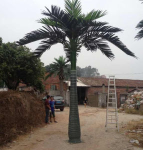 Outdoor Decoration Fiberglass Artificial King Palm Tree pictures & photos