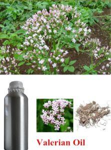 Aromatherapeutic 100% Natural Valerian Root Essential Oil pictures & photos