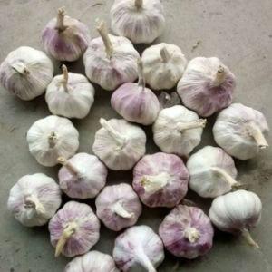 2017 New Season Fresh Garlic Top Quality pictures & photos