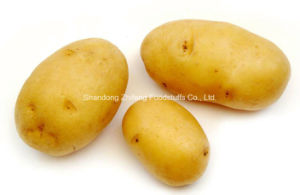 Fresh Potato pictures & photos