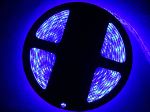 High Quanlity Waterproof 5050 Flexible LED Strip Lighting pictures & photos