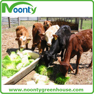 Breeding Tray for Animal Fodder pictures & photos