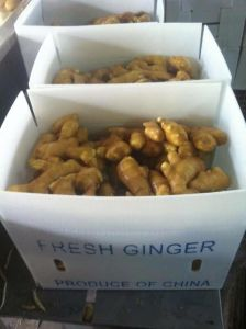 Fresh 250g and up Ginger pictures & photos