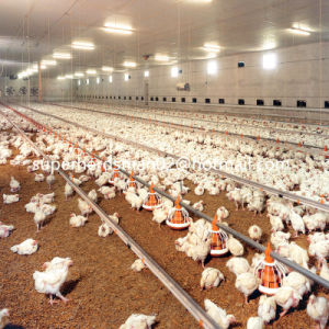 Automatic Poultry Farm Equipment for Broiler Production pictures & photos