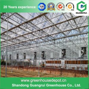 Hot Sale Professional Cheapest Glass Insulated Tempered Glass Greenhouse pictures & photos