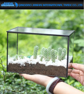 Glass Geometric Terrarium Box Tabletop Succulent Plant Terrarium Box pictures & photos