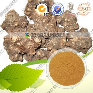 Natural Ferula Asafoetida Extract Herb Extract Ferulic Acid pictures & photos