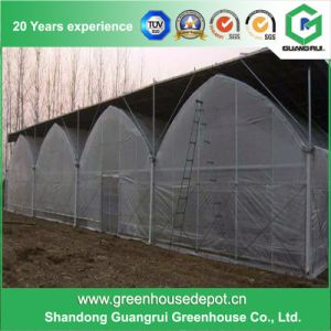 China Multi-Span Agricultural Greenhouses for Sale pictures & photos