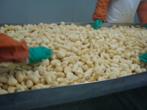 Frozen Ginger (100-150g) for Exporting pictures & photos