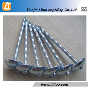 Umbrella Head Twist Shank Roofing Nails pictures & photos