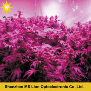 Higher Power 1200W Full Spectrum COB Grow Light with More Cost Efficiency pictures & photos