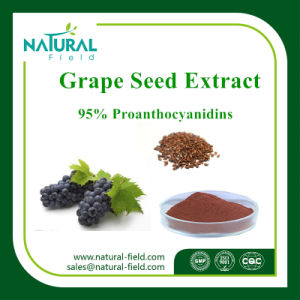 Factory Supply 100% Pure Grape Seed Extract Procyanidine 95% Powder Plant Extract pictures & photos