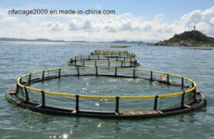 Aquaculture Traps Product Type and Fish, Fish Farm Use Fish Floating Cage pictures & photos
