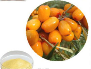 Pure Natural Hippophae Rhamnoides Fruit Extract for Sale pictures & photos