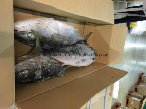 Frozen Yellow Tail Fish Supplier pictures & photos