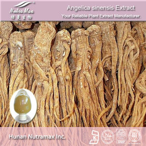 100% Natural Angelica Extract (1% Ligustilides, Ratio: 5: 1 10: 1 20: 1)