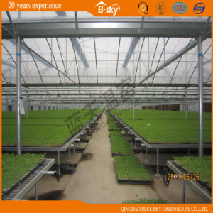 High Cost Performance Plastic Film Greenhouse for Vegetable Planting pictures & photos