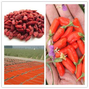 EU Certificate Organic Goji Berry (280)