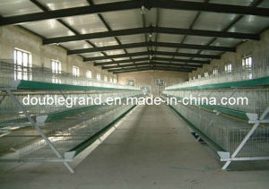 Prefab Truss Structure Poultry House, Chicken House, Farm Building (DG6-009)
