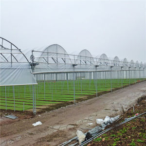 China Factory Dricetly Special High Multi Span Multi Greenhouse for Hot Area with Cheapest pictures & photos