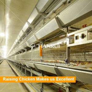 Battery Design Automatic Poultry Equipment for Pullet pictures & photos