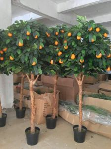 Best Selling Fuit Tree of Apple Tree Gu51694960 pictures & photos