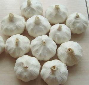 2015 Top Quality Fresh Pure White Garlic