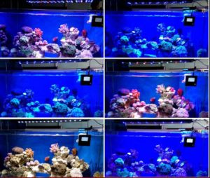 120W Marine Coral Reef Used LED Aquarium Light Programmable pictures & photos