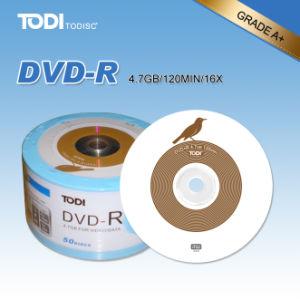 DVD-R Bird