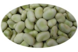 Broad Bean - 8