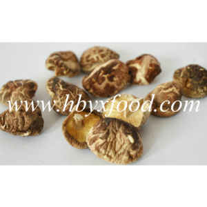 2-2.5cm out of Shape K Shiitake Mushroom pictures & photos