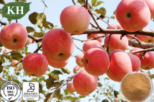 100% Natural Apple Extract with Polyphenol 45%, 50%, 75%, 80% pictures & photos