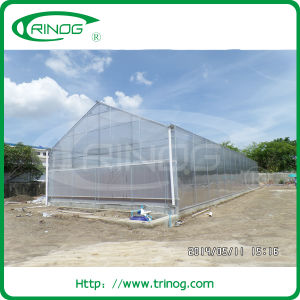 Commercial Polycarbonate Greenhouse for Flowers (PC) pictures & photos