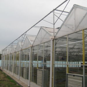 Multi-Span PC Greenhouse for Fruits pictures & photos