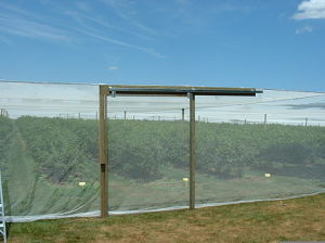 Orchard Anti-Insect Net (45X40, 6X8, etc) pictures & photos